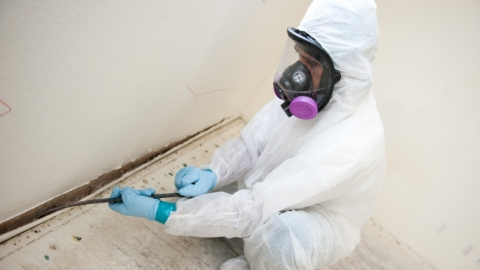 Things about mold everyone believes are true but they aren t