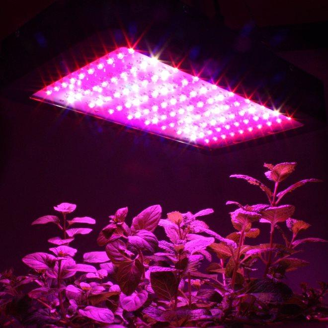 Do Your Indoor Plants Need Artificial Grow Lights Home