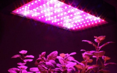 Do Your Indoor Plants Need Artificial Grow Lights?