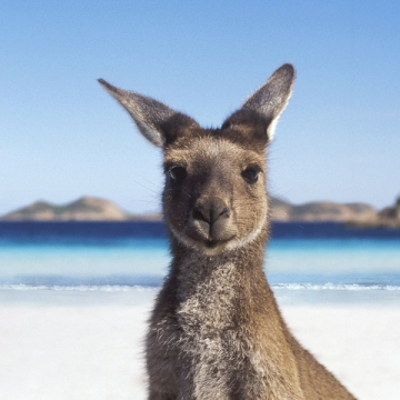 Things you should know before moving to Australia Picture