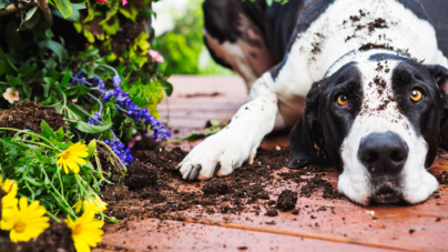 Guidelines to make your backyard dog-safe
